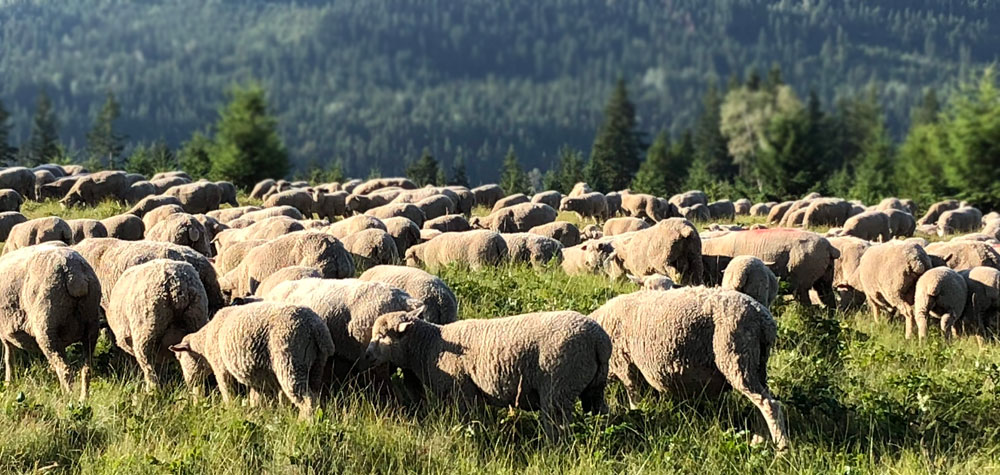 BC Sheep Federation Upcoming Events